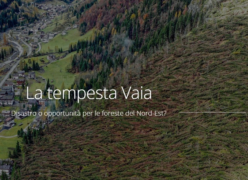 """Pubblicate le presentazioni del convegno """"La tempesta Vaia: disastro o opportunità per le foreste del nord-est?"""""""