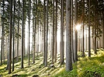Giornata mondiale dell'Ambiente: anche le foreste collaborano