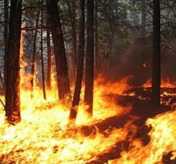 Presidenza del Consiglio: campagna estiva antincendio boschivo 2019