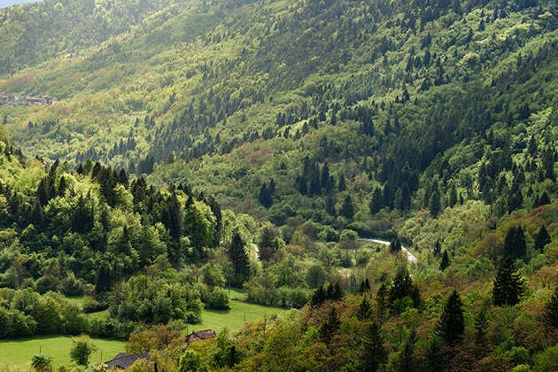 """Regione Veneto: Approvati 34,2 milioni per settore agricolo, foreste e """"aree interne"""""""