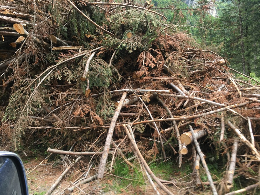 A Boster nord est le strategie per conservare il legname abbattuto dalla tempesta Vaia