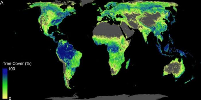 Studio sulla superficie potenziale per una copertura forestale globale