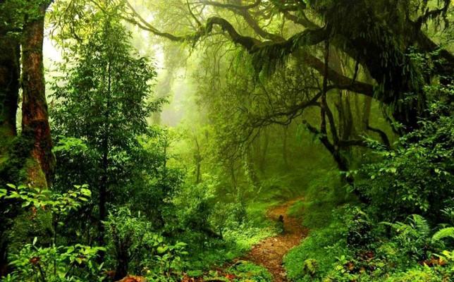 Allarme dall' Ateneo di Firenze: le foreste pluviali assorbono meno CO2